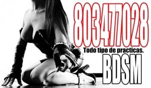 DOMINA WEBCAM REAL 803